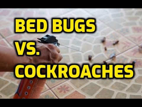 Bed Bugs vs. Cockroaches (Which Is Worse?)