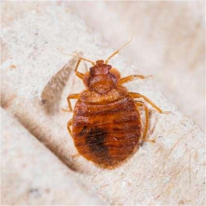 can bed bugs get out of plastic bags?
