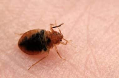 early signs that you have bed bugs in your home
