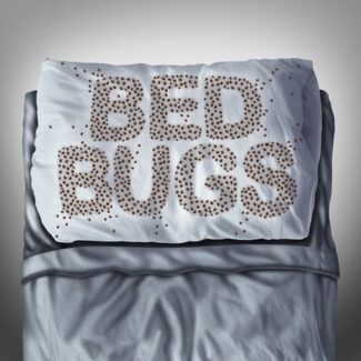 bed bugs plastic bags suffocate