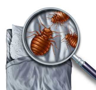 Does Lavender Repel Bed Bugs?