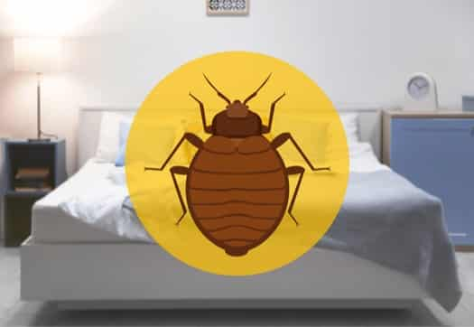 why do bed bugs come into your home?