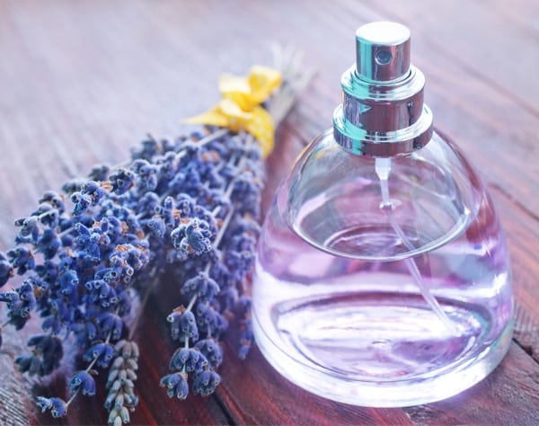 Does Lavender Really Repel Bed Bugs? — Bed Bugs Insider