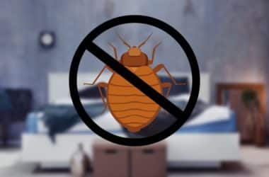 how to prevent bed bugs coming home with you