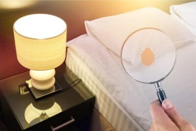 how to remove bed bugs from wood furniture