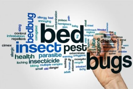 carpet beetles and bed bugs together