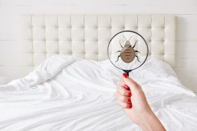 do bed bugs leave marks?