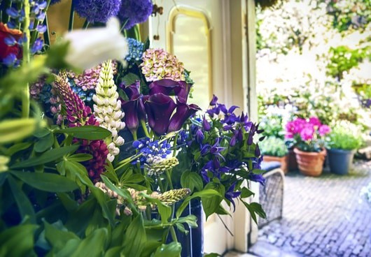 patio plants that repel bugs