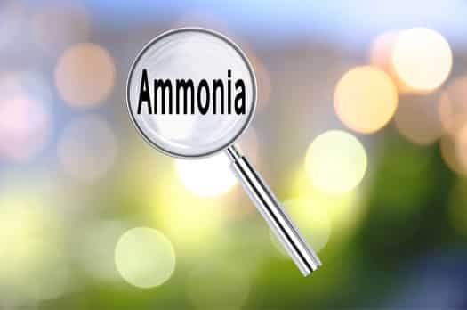 is ammonia good for bed bugs?