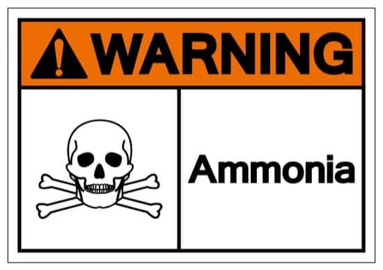 precautions when using ammonia to kill bed bugs