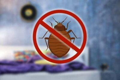 what happens after bed bug treatment?