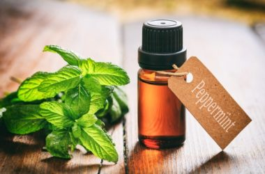 does peppermint oil kill bed bugs?