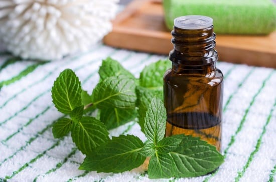 how to make peppermint oil bug spray
