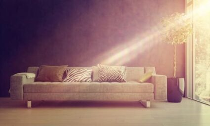 bed bugs hate sunlight
