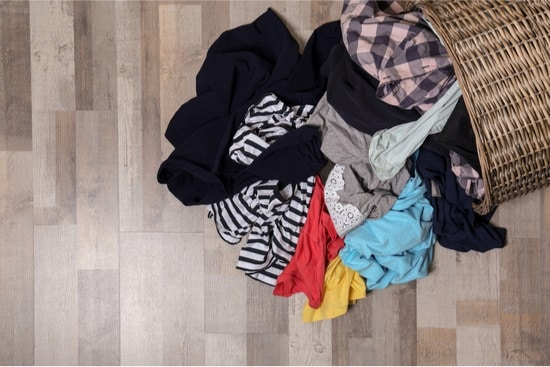 do bed bugs lay eggs in clothes?