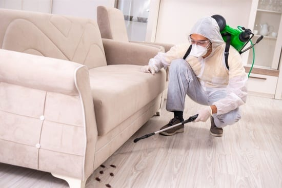 permethrin bed bugs treatment