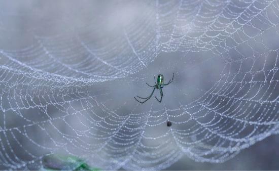 Spider vs. Bed Bug Bites